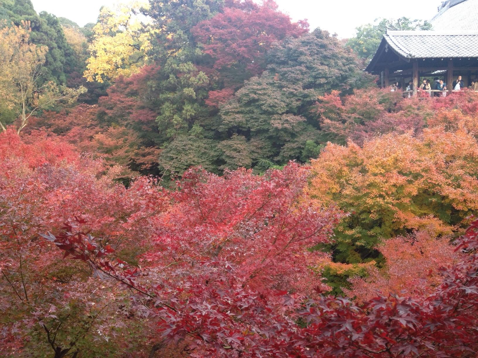京都お土産( ´艸`)